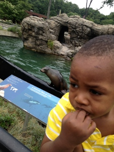 Jeremiah and Sea Lion